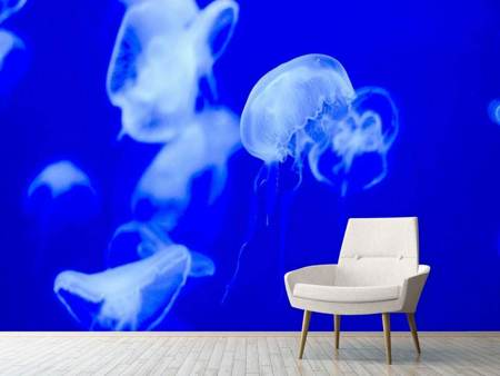 Photo Wallpaper Floating jellyfish