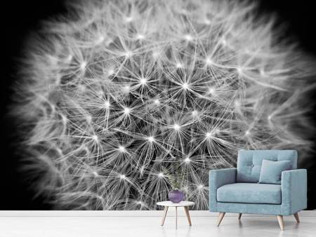 Photo Wallpaper Dandelion in XXL
