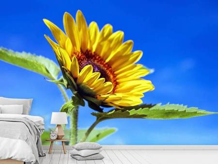 Photo Wallpaper Sunflower in XL