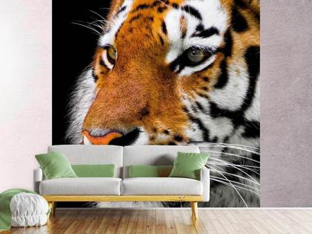 Photo Wallpaper Close up tiger head