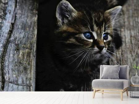 Papier peint photo Enfant chat
