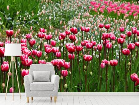 Photo Wallpaper Wild tulip field