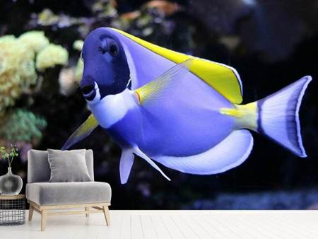 Photo Wallpaper The Weisskehl doctorfish fish