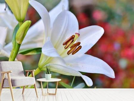 Photo Wallpaper Magnificent lily in white