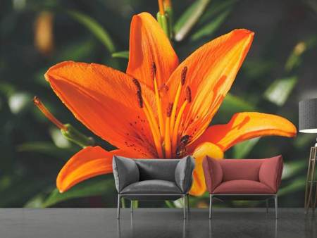 Photo Wallpaper Lilies blossom in orange XL