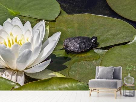 Photo Wallpaper Lotus and the turtle