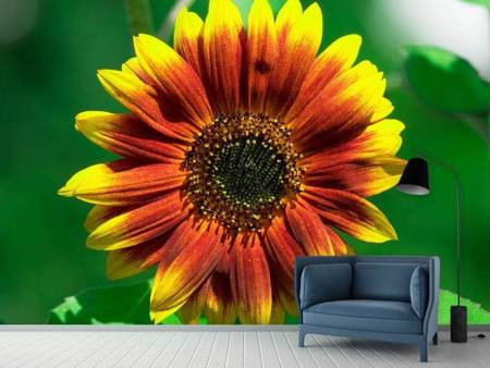 Photo Wallpaper Colorful sunflower