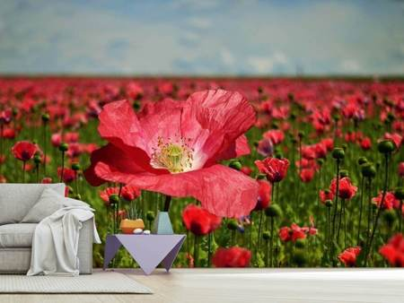 Photo Wallpaper The lush poppy field