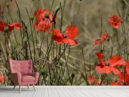 Photo Wallpaper The poppy in nature