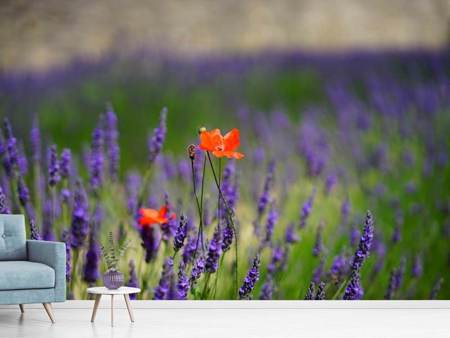 Photo Wallpaper Poppy in the lavender