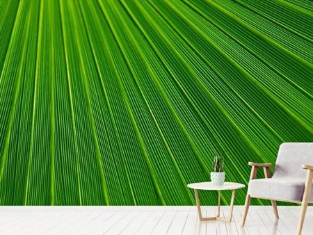 Photo Wallpaper Palm stripe 1