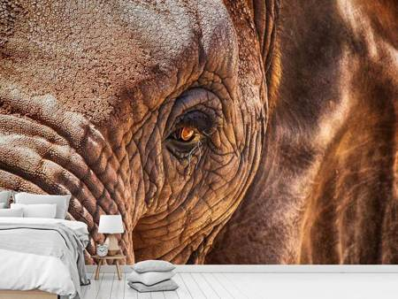 Photo Wallpaper The look of the elephant