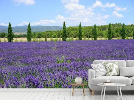 Photo Wallpaper Magnificent lavender field