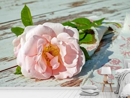 Photo Wallpaper Wild rose in pink