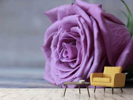 Photo Wallpaper Rose in purple XXL