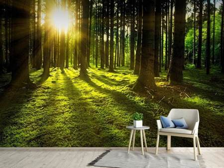 Photo Wallpaper Sunlight in the forest