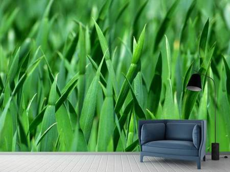 Photo Wallpaper Blades of grass in XL
