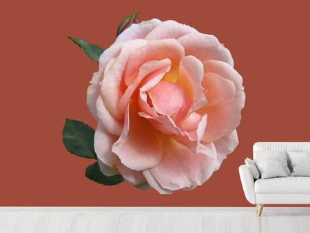 Photo Wallpaper Rose in pink XXL 2