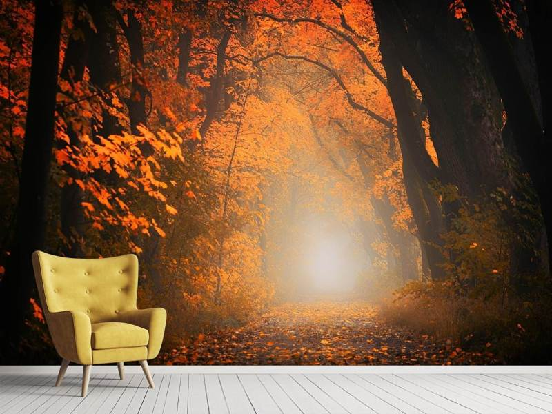 Photo Wallpaper Autumn light in the forest