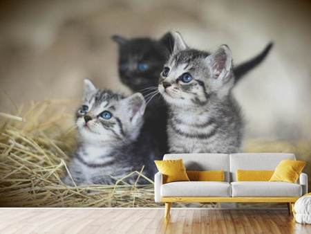 Papier peint photo Trio chaton