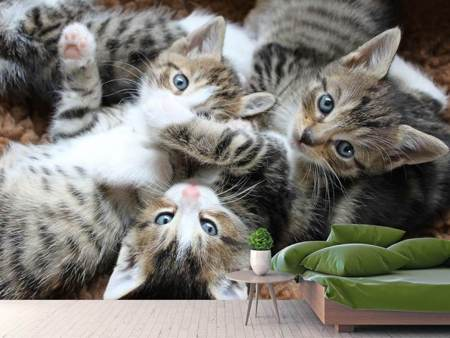 Photo Wallpaper Many kittens