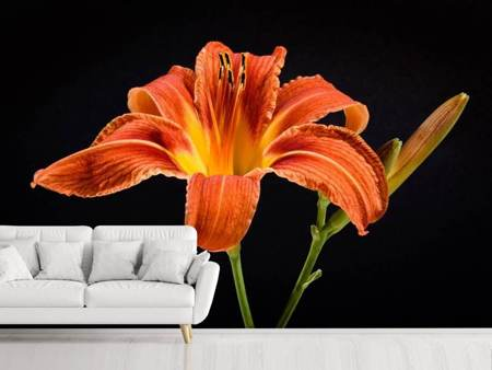 Photo Wallpaper A lily flower in orange