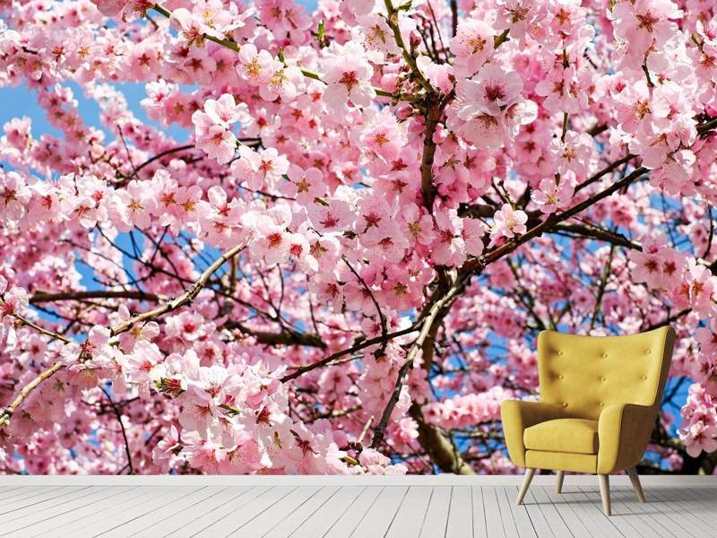 Photo Wallpaper Wonderful Japanese cherry