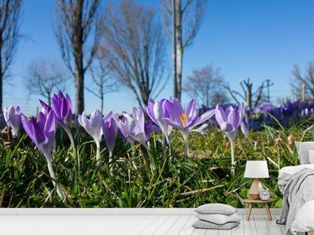 Photo Wallpaper Purple crocus in nature