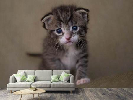Photo Wallpaper Adorable kitten