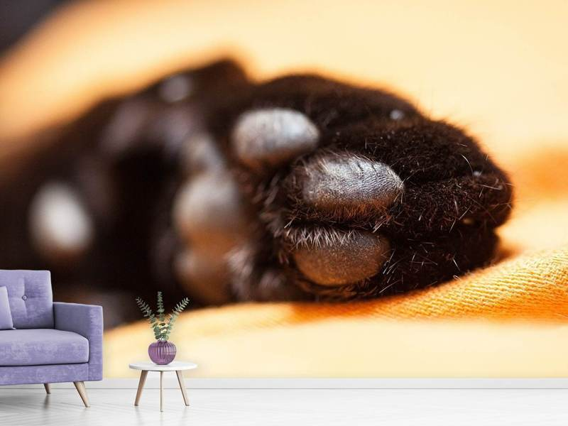 Photo Wallpaper cat's paw