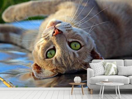 Photo Wallpaper green eye