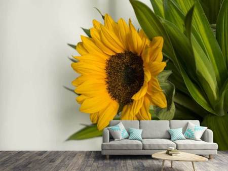 Photo Wallpaper Beautiful sunflower