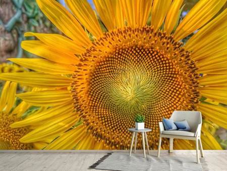 Photo Wallpaper Inflorescence of a sunflower