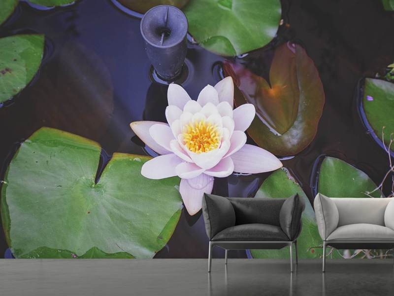 Photo Wallpaper The lily pad in white
