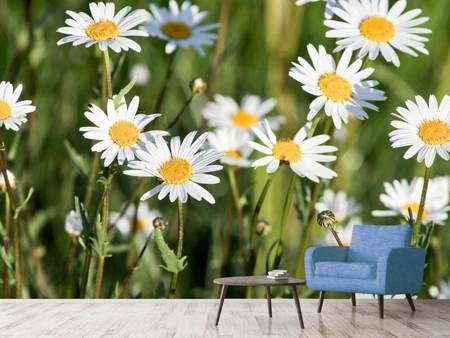Photo Wallpaper XL daisies