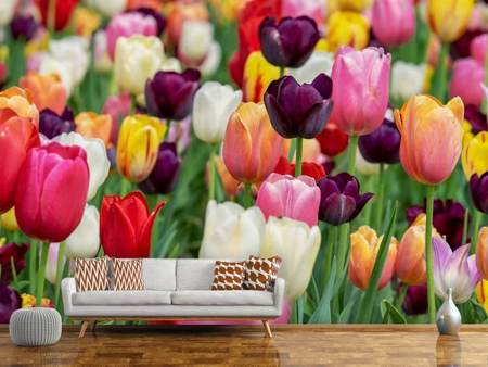 Photo Wallpaper The colors of the tulips