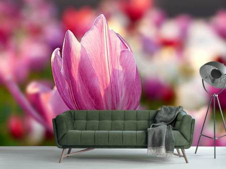 Photo Wallpaper Tulip in pink