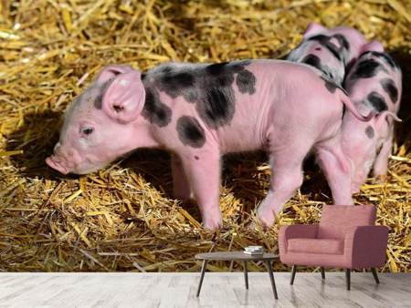 Photo Wallpaper Sweet piglets