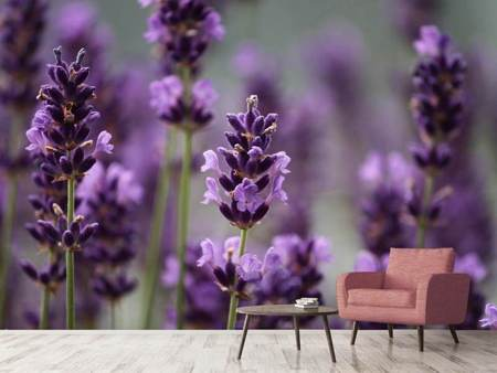 Photo Wallpaper Macro lavender