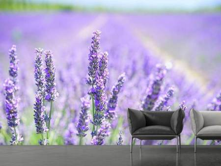 Photo Wallpaper The lavender blossom