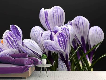 Photo Wallpaper The crocus