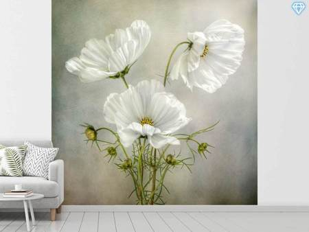 Papier peint photo Cosmos Charm