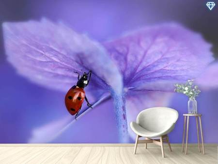 Photo Wallpaper Ladybird On Purple Hydrangea