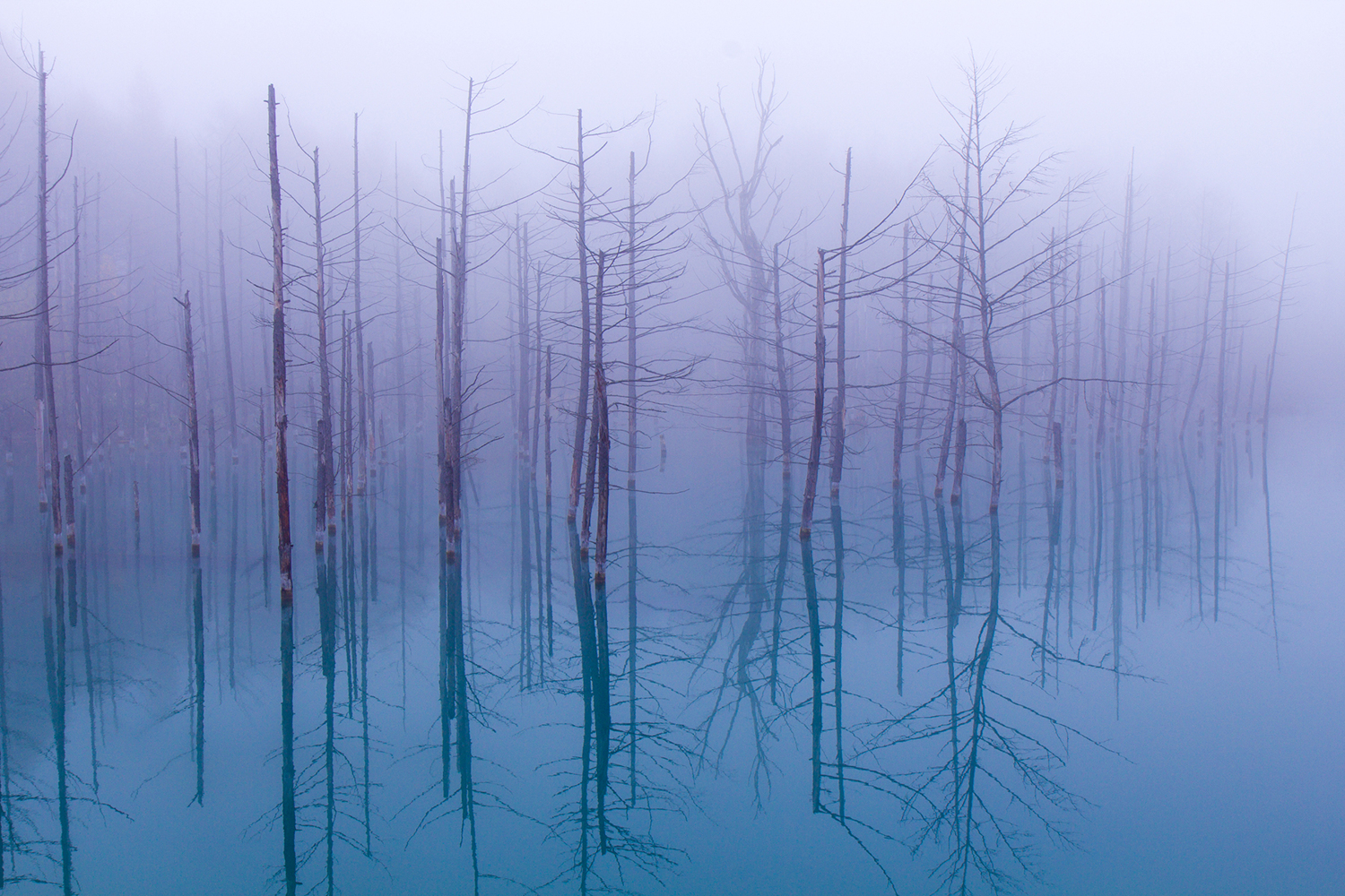Photo Wallpaper Misty Blue Pond