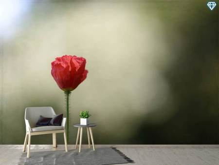 Photo Wallpaper Red Poppy