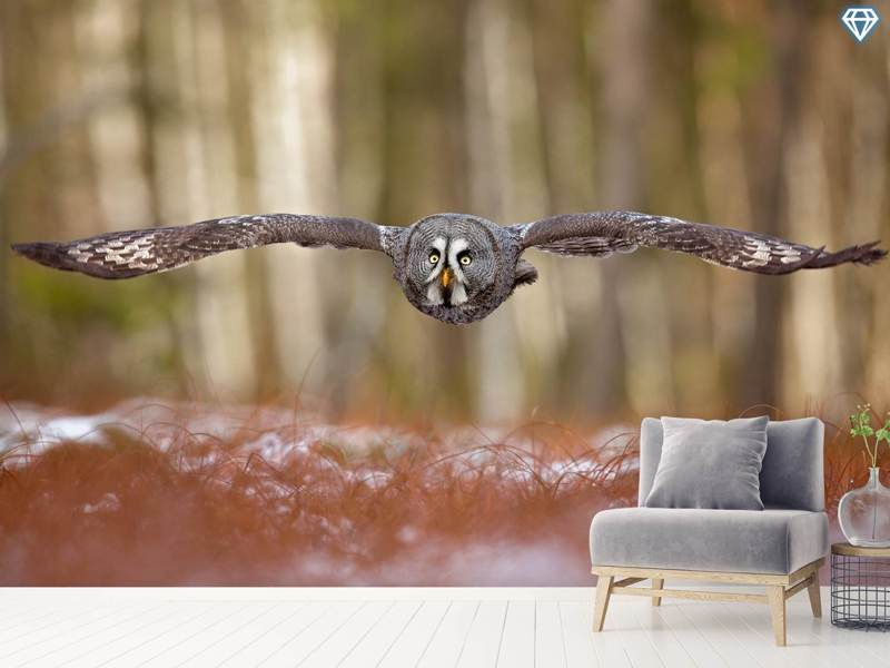 Photo Wallpaper Great Grey Owl