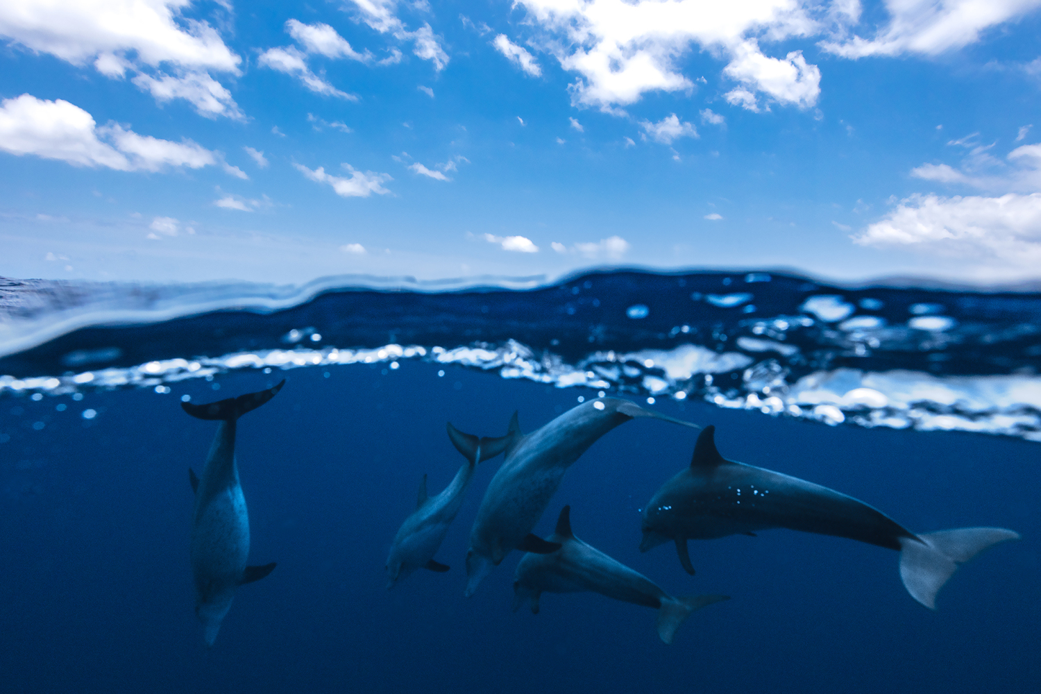 Fotomurale Between Air And Water With The Dolphins