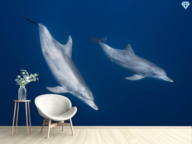 Papier peint photo Bottlenose Dolphins