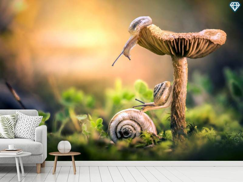 Photo Wallpaper The Awakening Of Snails
