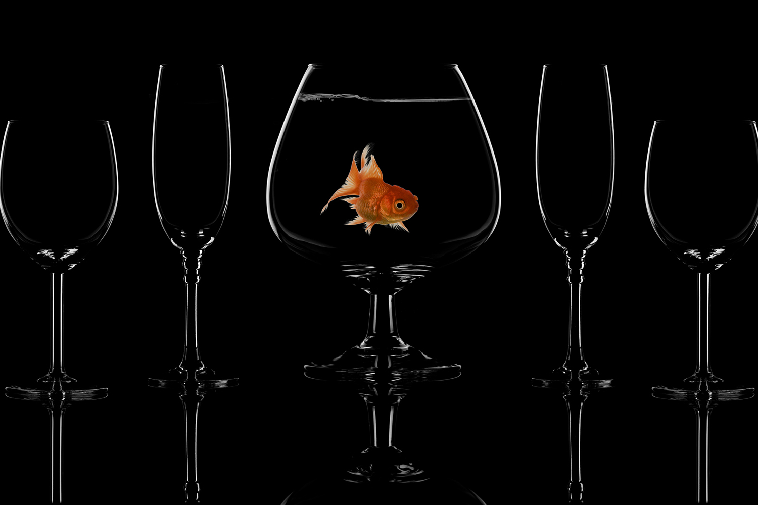 Photo Wallpaper Glass Fish